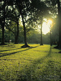 Morning sun in green park