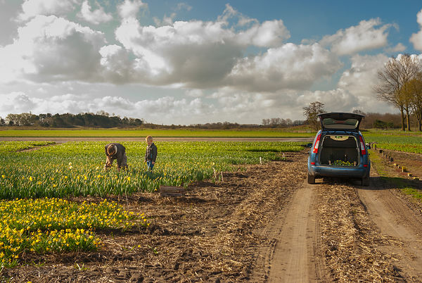 Father and son at work on the flower fields series 4of7