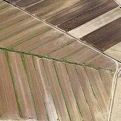 Crop Fields, Grosseto