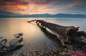 Sunset over fallen tree Lake Maggiore Italy