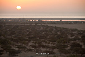 A sunrise on Sir Bani Yas Island in Abu Dhabi.