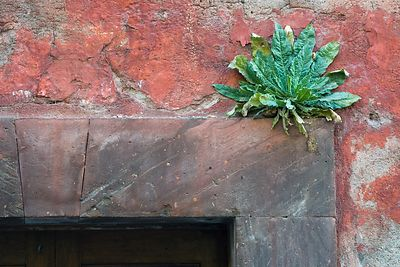 Plant Over Doorway