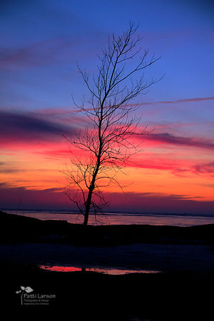 Lone Tree in the Sunset