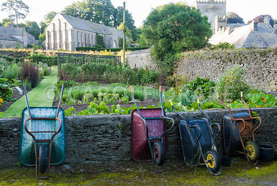 Walled kitchen garden, once part of the abbey, with 13th century Great Barn of Buckland Abbey rising above and wheelbarrows neatly parked in foreground. The Cider House, Buckland Abbey, Yelverton, Devon, UK