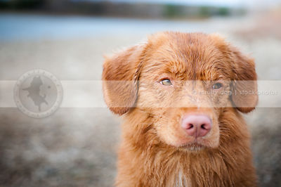 expressive wet dog looking sideways with bokeh background