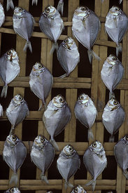 8205.05_Fish_drying