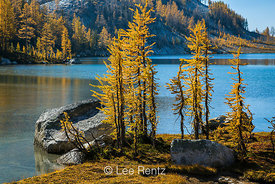 Autumn Alpine Larch Trees Along Perfection Lake in The Enchantments