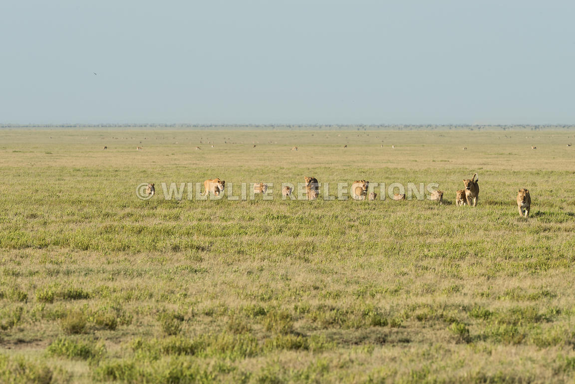 lion_plains_walk_02232015-7