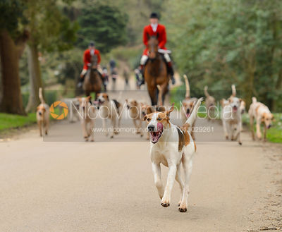 The Belvoir and South Shropshire Hunts at Belvoir Castle 11/3 photos