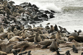Seals on rocky shore