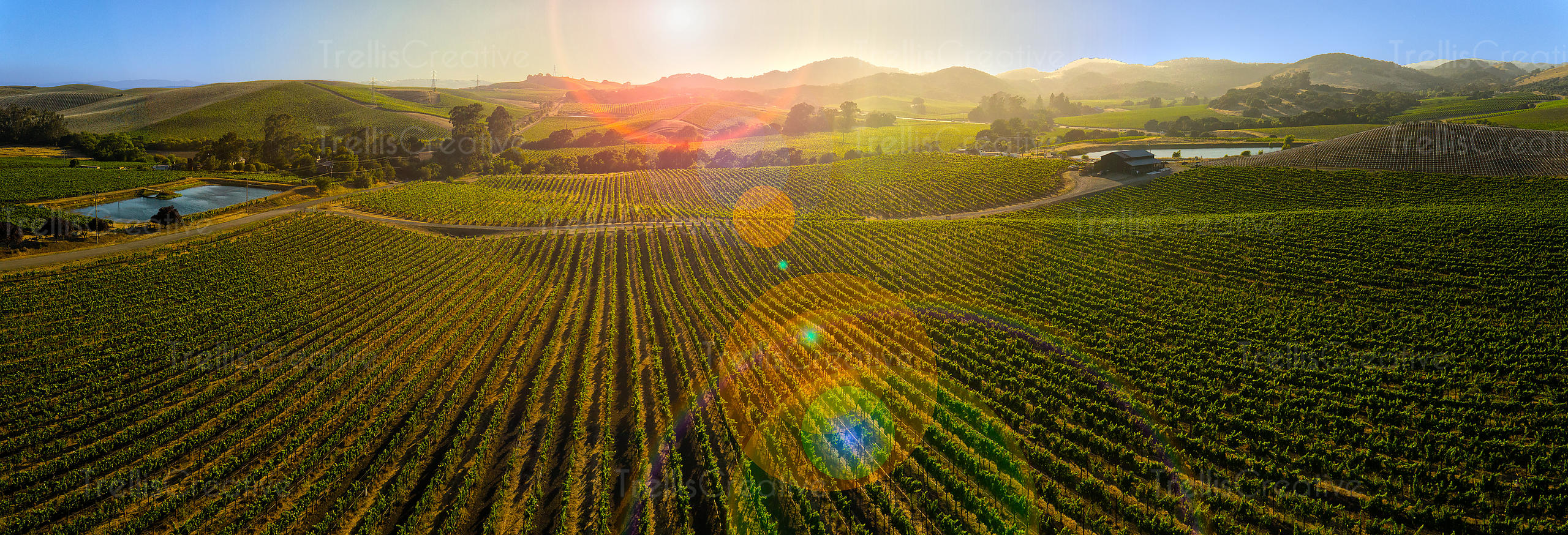 ariel panoramic views of vineyard landscape in Napa valley