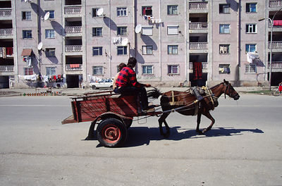 A horse and cart in Shkoder