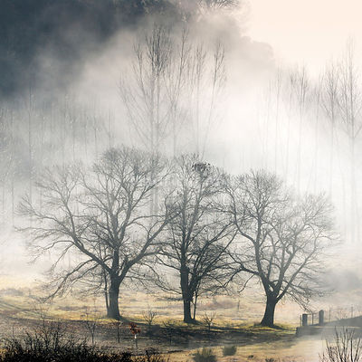 Chestnut trees in a misty day. Montesinho Natural Park, Trás-os-Montes, Portugal