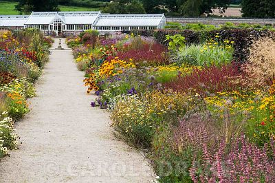 Double herbaceous borders planted with predominantly hot colours lead toward renovated Victorian greenhouses. Key plants include dark red Persicaria amplexicaulis 'Atrosanguinea', Chrysanthemum segetum 'Eastern Star', annual marigolds and rudbecias, dahlias, Echinacea purpurea Bressingham hybrids, tall Rudbeckia laciniata Juligold' and blue Echinops ritro. Helmsley Walled Garden, Helmsley, York, North Yorkshire, UK