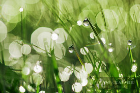 Grass and dew - Europe, Germany, Bavaria, Upper Bavaria, Munich - digital