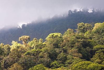 Clouds roll in over primary forest, Las Nubes, Costa Rica