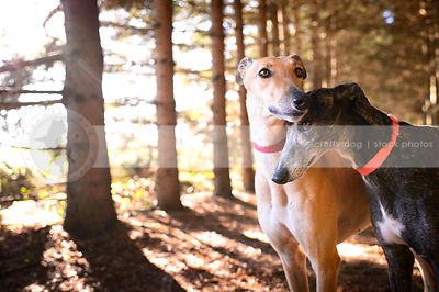 portrait of two dogs hugging standing together in forest