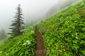 Trail to Mount Townsend through Subalpine Meadow in Olympic National Forest
