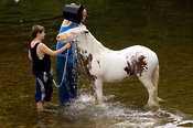 Washing horses in the River Eden at the ancient Appleby Horse Fair held each June
