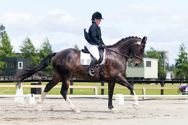 NZ Warmblood Assn Adult Elementary photos