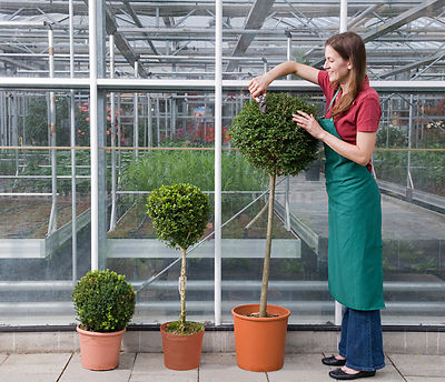 woman caring for plant