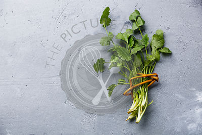 Fresh coriander bunch leaf vegetable on concrete background copy space