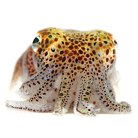 Sea creature portraits - White photos