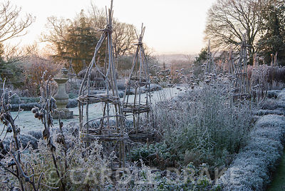 Frosty remains of herbaceous plants in the Rainbow Garden in beds edged with lavender. Kingston Maurward Gardens, Dorchester. Dorset, UK