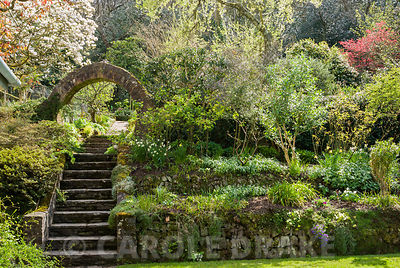Circular brick built entrance into the kitchen garden at the top of steps leading up from the lawn, with magnolia flowering beyond. Greencombe Garden, Porlock, Somerset, UK