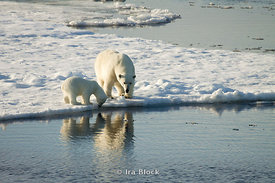 A mother polar bear and her young cub on an ice floe near Edgoya, Norway.