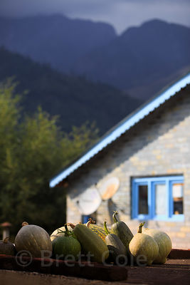 Gourds on a rooftop during fall harvest time, Manali, India
