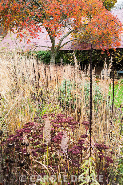 Circular bed of grasses and perennials including Sedum 'Purple Emperor' and Digitalis ferruginea against orange prunus and red oxide barn roof. The Buildings at Broughton, near Stockbridge, Hants