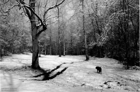 Walk with dog in snow, Artist's Hollow