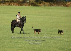 Hurston Place Farm Hound Exercise