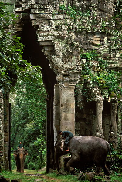 Elephants, Angkor Thom E Gate