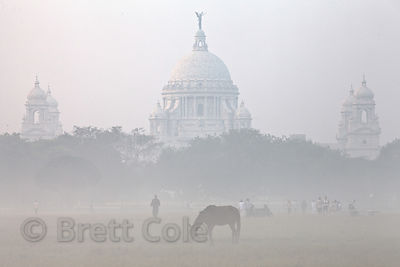 A horse grazes, with Victoria Memorial in the background. on a foggy morning on the Maidan, a large park in central Kolkata, India.
