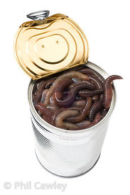 Opened Can of Worms