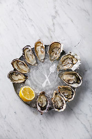 Open Oysters with lemon on ice on white marble background