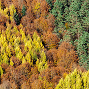 Forest Patterns aerial photos