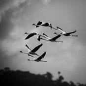 7253-Bird_Laurent_Baheux