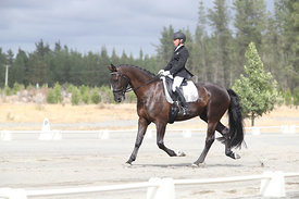 SI_Festival_of_Dressage_310115_Level_1_Champ_0687
