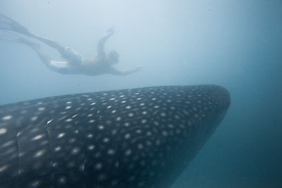 Whale sharks adventure photos