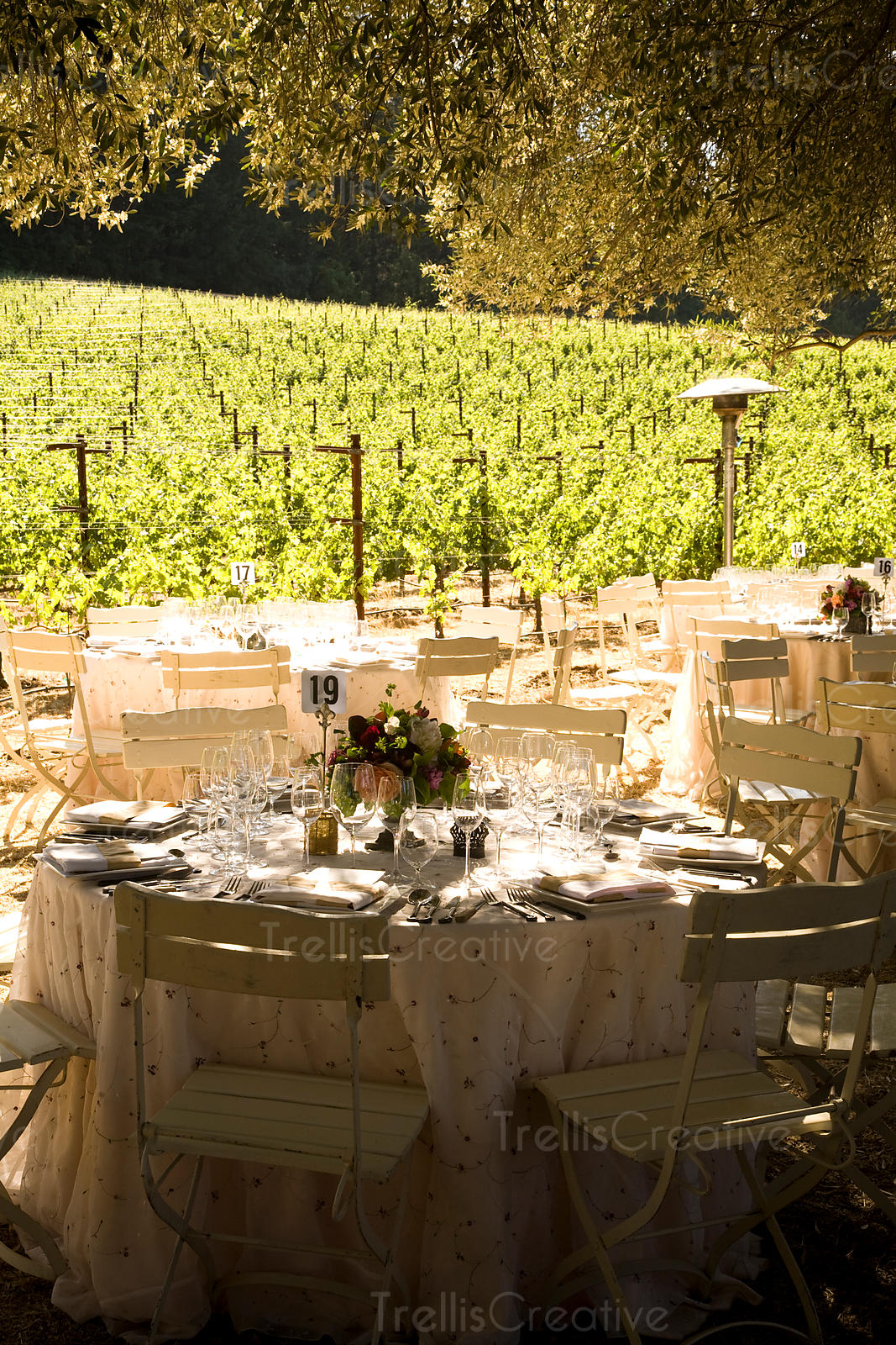 The sun shines on tables set for a party beneath an old olive grove