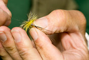 Trout fisherman tying fly onto line