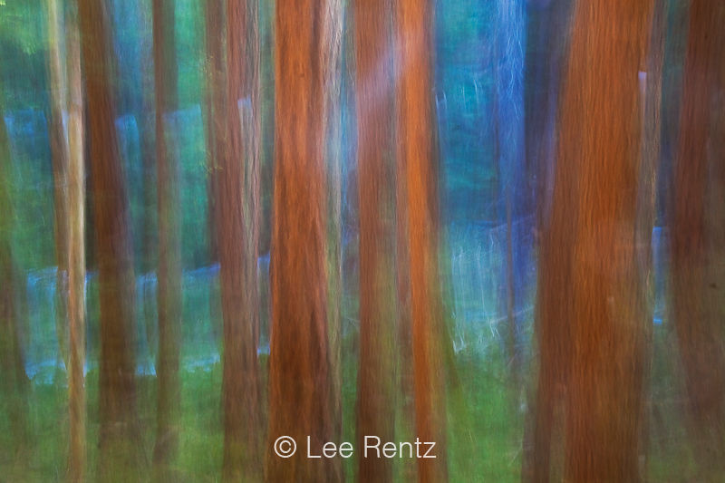 FOREST IMPRESSIONS 9: Hemlock Forest