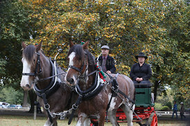HOY_230314_clydesdales_3581