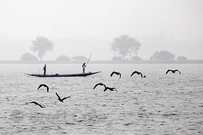Cormorants fly in front of fishing boats in the East Kolkata Wetlands, Kolkata, India.
