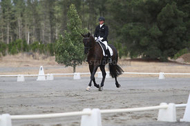 SI_Festival_of_Dressage_310115_Level_1_Champ_0700