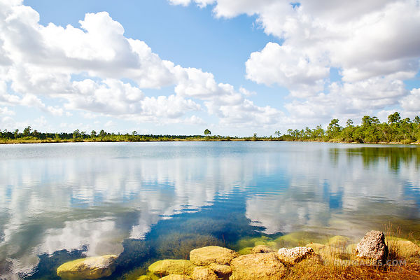 PINE GLADES LAKE EVERGLADES NATIONAL PARK FLORIDA