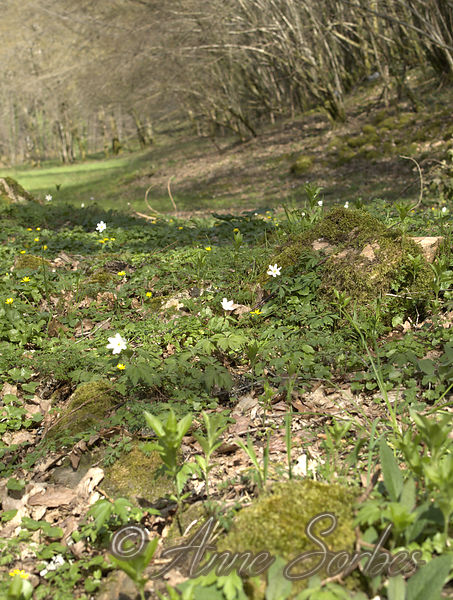 The north side was plunged a small stream or flowered wood anemones and lesser celandines in spring. The tiny stream disappeared and the forest that bordered it.